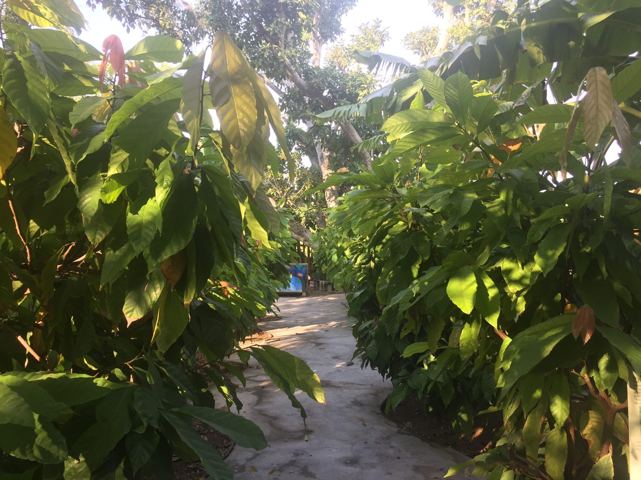Cacaos 11 del 11